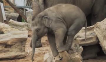 Самые неуклюжие слоники