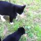 Первая встреча котят и щенков
