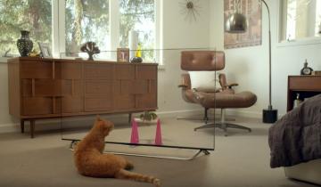 Реакция животных на новый телевизор