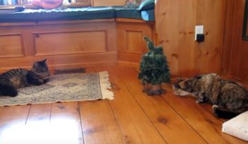 Посмотрите, что напугало этого милого котика