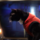 Увлекательные приключения кошек в космосе