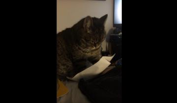 Кошка не может оторваться от бумаги