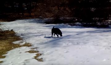 Пес нашел новый способ зимних развлечений