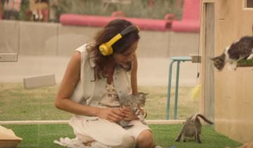 Терапия пи помощи кошек