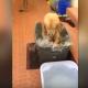 Собака принимает ванну. Посмотрите с каким веселием она это делает!