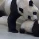 Панда укладывает своего малыша спать