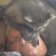 Енот играет со спящей хозяйкой