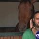 Лошадь мешает репортеру