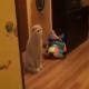 Кошка увидела, как купают ребенка, ее реакция бесподобна!