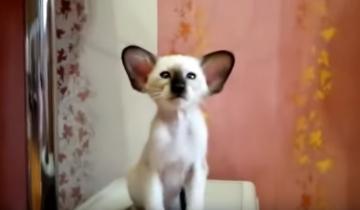 Самый милый котенок в мире
