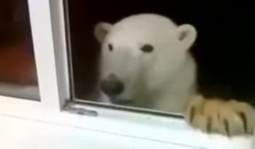 В окно постучали необычные гости