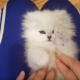 Котенок играет со своими лапками