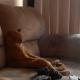 Кот с интересом смотрит видео с выступлением известной группы!