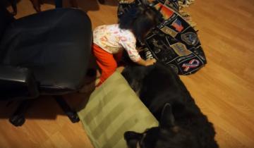 Маленькая хозяйка укладывается спать рядом со своими собаками