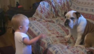 Ребенок ругает собаку, посмотрите на ее реакцию