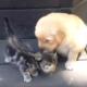 Котенок знакомится со щенком