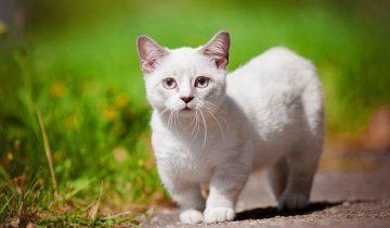 Самый разговорчивый котенок в мире