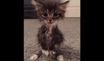 Эта кошка родилась без передних локтевых суставов. Как сложилась ее судьба?
