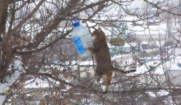 Кот украл у птиц сало, рискуя сорваться с тонкой ветки