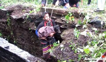 Собака заплакала, увидев своих спасателей
