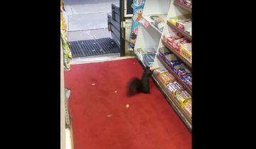 Белки стали звездами интернета, украв в магазине сладости