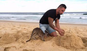 Когда твой домашний питомец — кенгуру