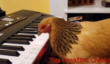 Курица-патриот: новый хит сети