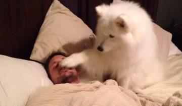 Лучший будильник в мире — это верный пес: 4 миллиона просмотров