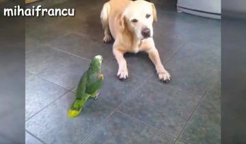 Собаки против попугаев: кто кого?