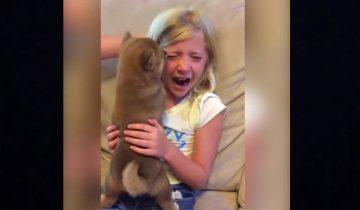 Ну очень долгожданный подарок: девочка ждала собаку семь лет!
