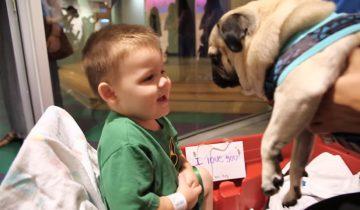 Мопс посетил детскую больницу: как детки реагируют на такого гостя!