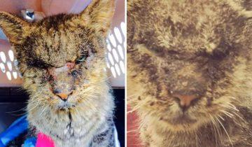Она взяла на руки этого кота, который всех отталкивал своим внешним видом