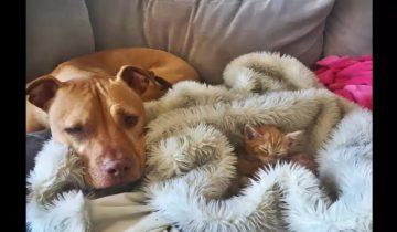 Пес получил в подарок котенка из приюта. Что произошло дальше?