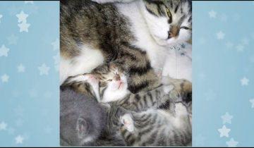 Этот котенок со свалки был спасен сердобольной женщиной…