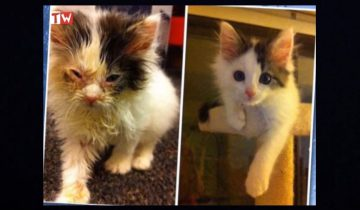Фотографии кошек до и после того, как их спасли добрые люди