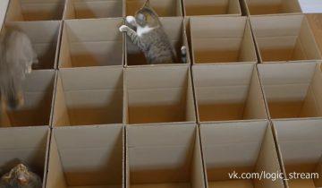 Коты обожают играть с коробками. Задумывались ли вы, почему?