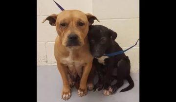 Эти собаки не знали, что такое любовь и забота. Но они попали к новым хозяевам…