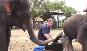 Слон-пианист сыграл дуэтом с человеком