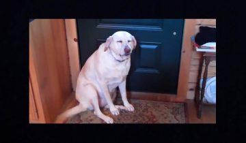Эта собака съела кошачий корм. Ох, как ей стыдно за свое поведение!