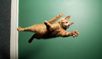 Ловкость и сноровка: удивительные трюки в исполнении котов