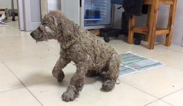 Чудесное возрождение пса после истязаний: невозможно смотреть без слез