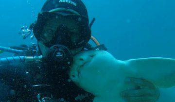 Дружба человека и акулы? Это не фантастика, а реальность