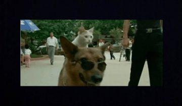 Кот ездит верхом на собаке: вот что значит дружба