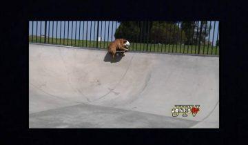 Вот это собака! Так ловко гоняет на скейтборде! 1,7 млн просмотров