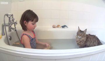 Неимоверно трогательная история: кошка помогла девочке с аутизмом