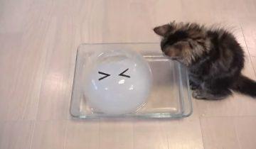 Как коты лижут лед: забавные кадры для хорошего настроения