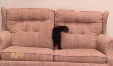 Умеете ли вы проходить сквозь диван? Это настоящий кот-Копперфильд