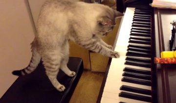 Звездная кошка Нора покорила интернет игрой на пианино