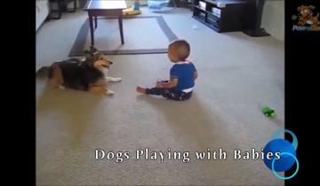 Дети и собаки созданы друг для друга: доказательства в этом видео
