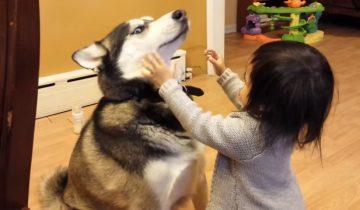 Вот она — настоящая любовь! Эта девочка обожает свою собаку